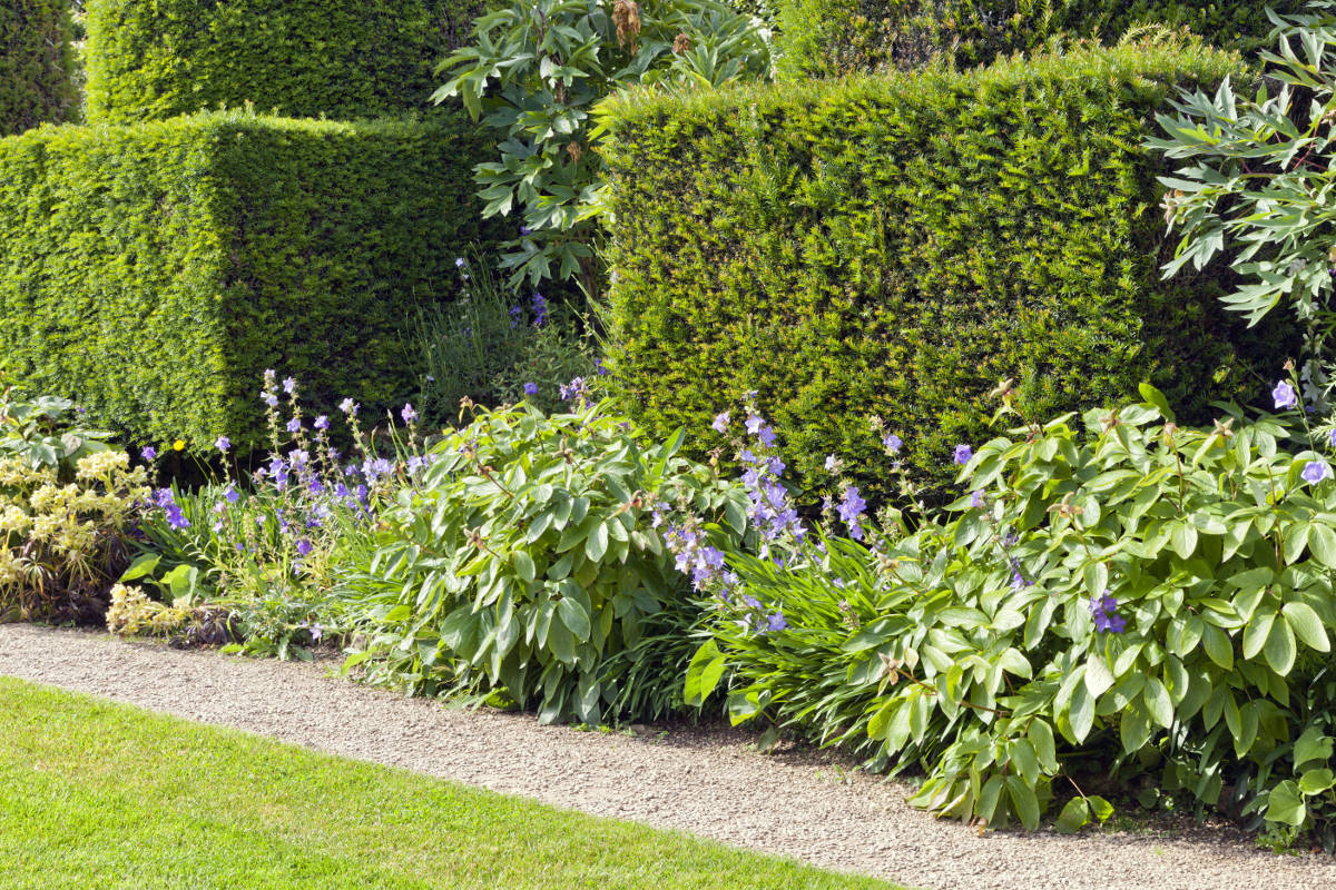 hedges-fences-or-boundary-walls 100+ Surprising Garden Design Ideas You Should Not Miss in 2021