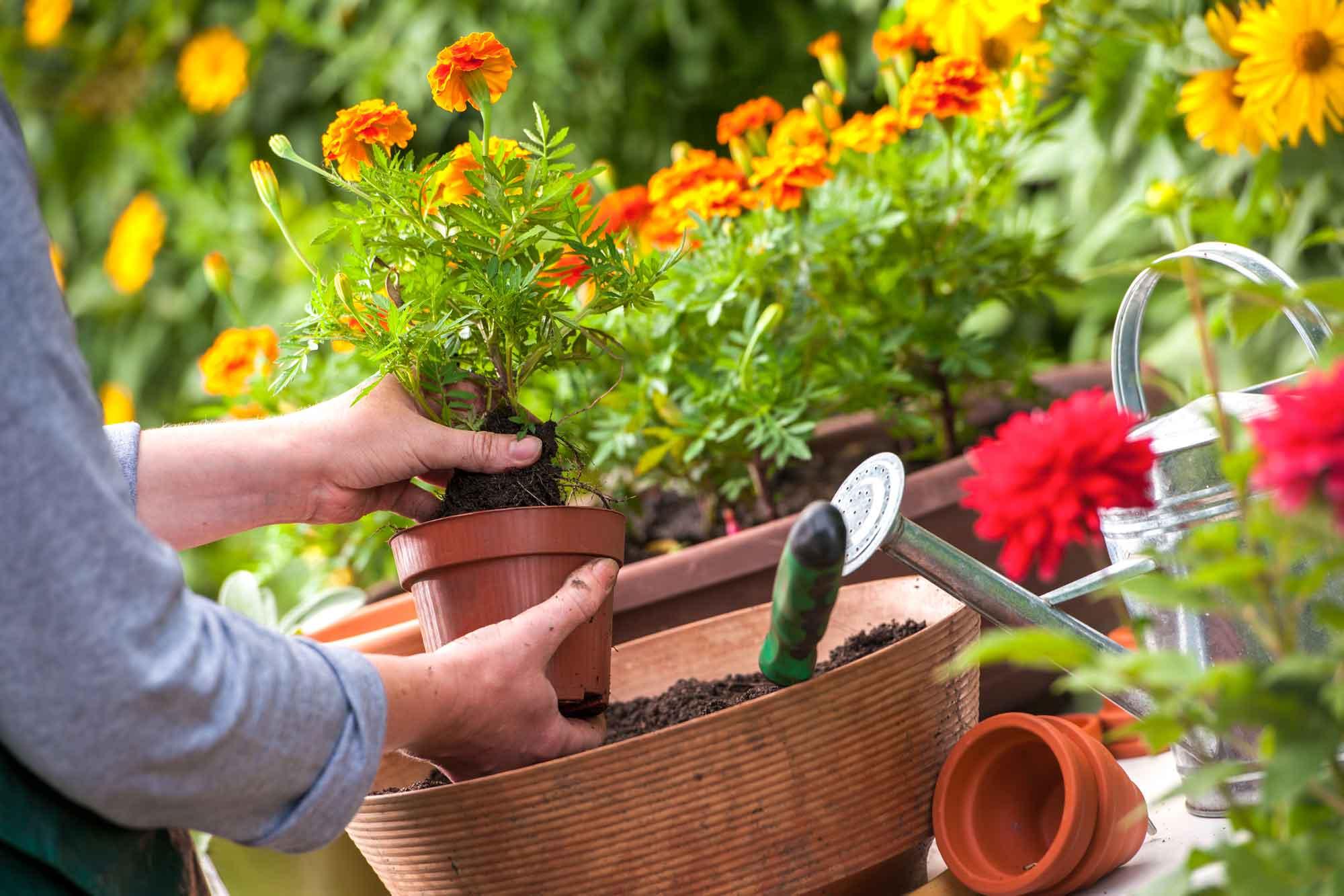 planting-gardens 100+ Surprising Garden Design Ideas You Should Not Miss in 2021