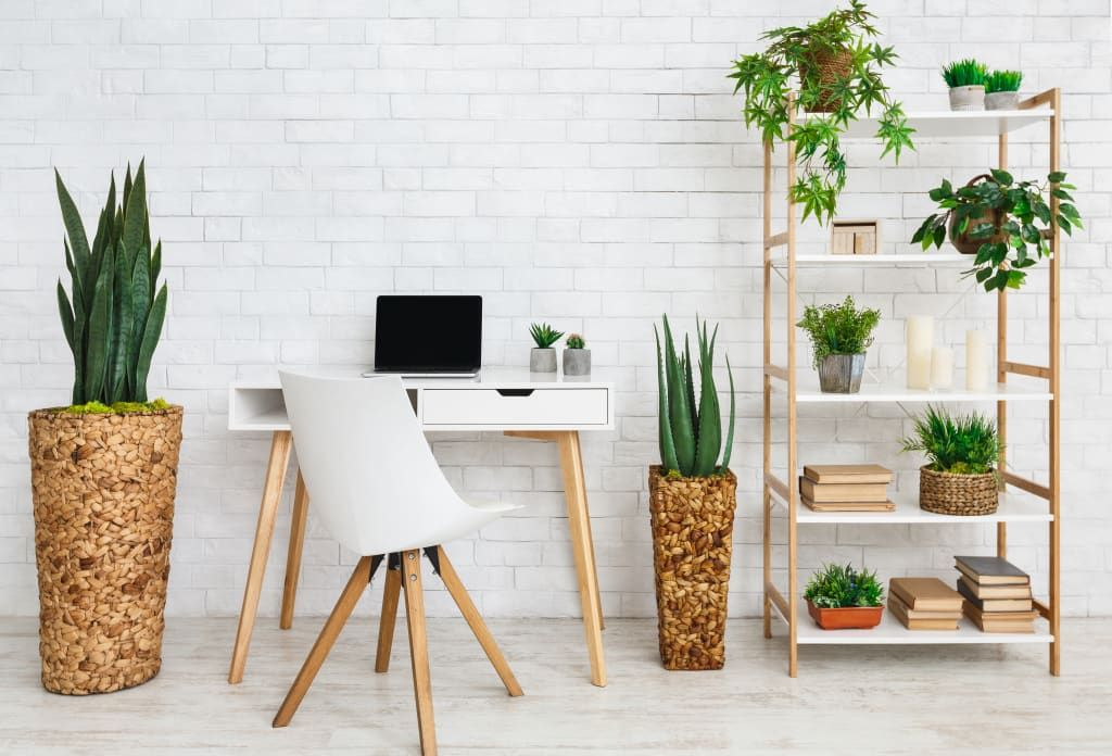 Using-plants-in-study-space-1 10 Tips to Design the Study Space Perfectly