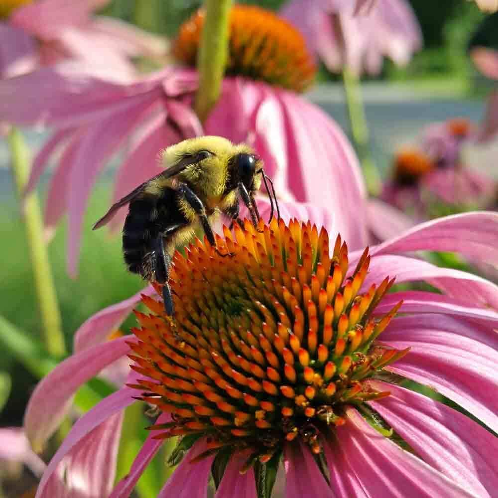 bee 100+ Surprising Garden Design Ideas You Should Not Miss in 2021