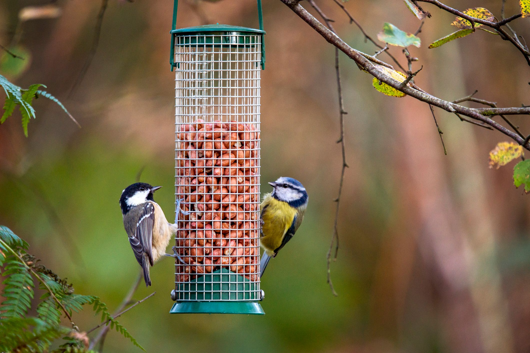 hang-bird-feeders-on-fences. 100+ Surprising Garden Design Ideas You Should Not Miss in 2021