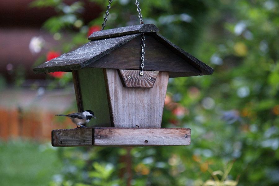 hang-bird-feeders-on-fences 100+ Surprising Garden Design Ideas You Should Not Miss in 2021