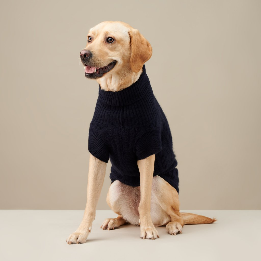 A-turtleneck. 10 Unique Luxury Gifts for Dogs That Amaze Everyone