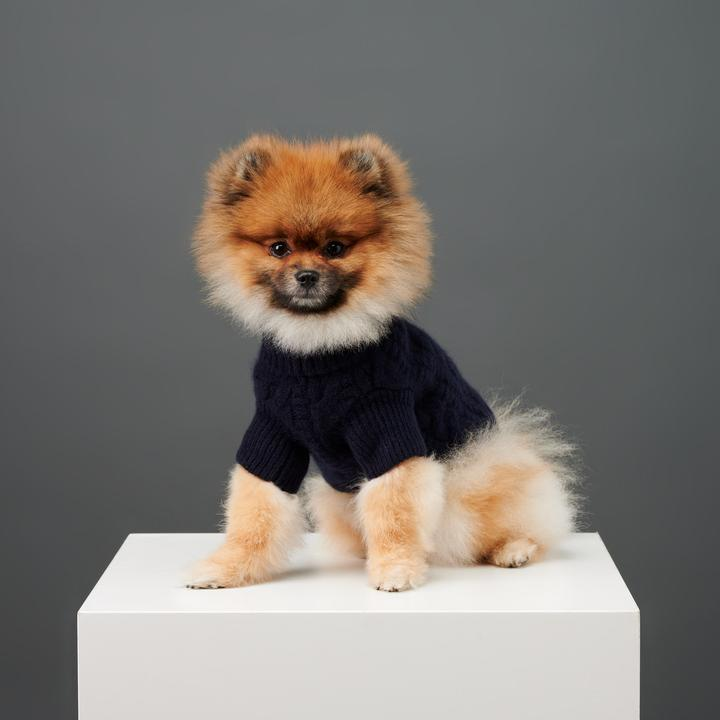 A-turtleneck 10 Unique Luxury Gifts for Dogs That Amaze Everyone