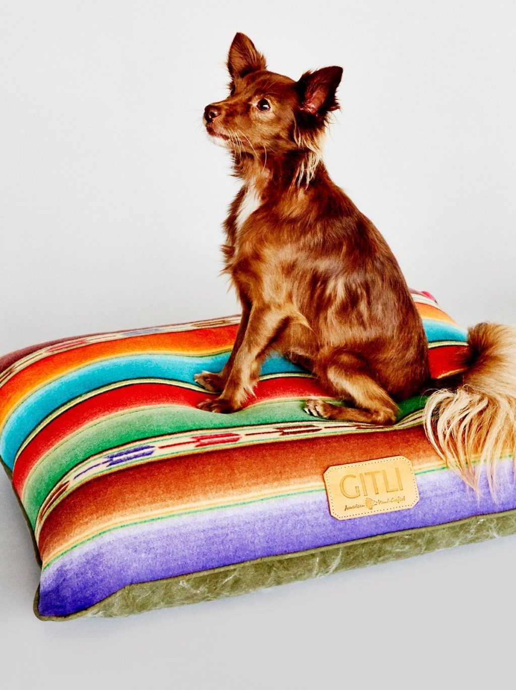 Colorful-bed-1024x1367 +80 Adorable Dog Bed Designs That Will Surprise You