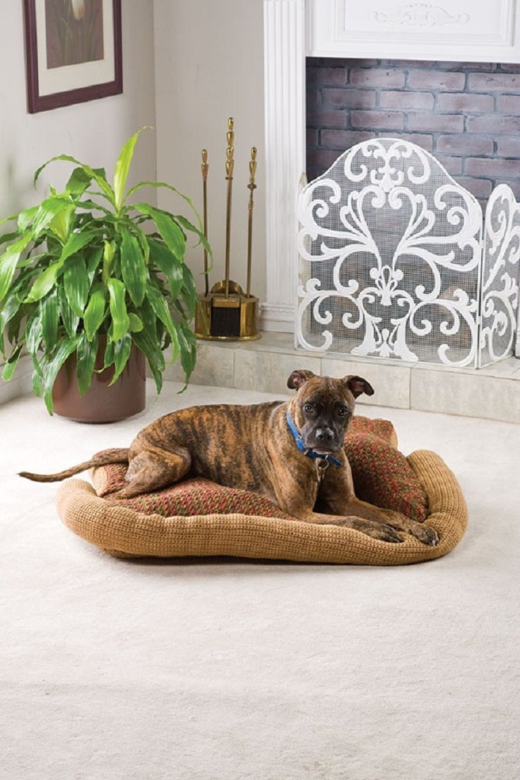 Doggie-pillow. +80 Adorable Dog Bed Designs That Will Surprise You