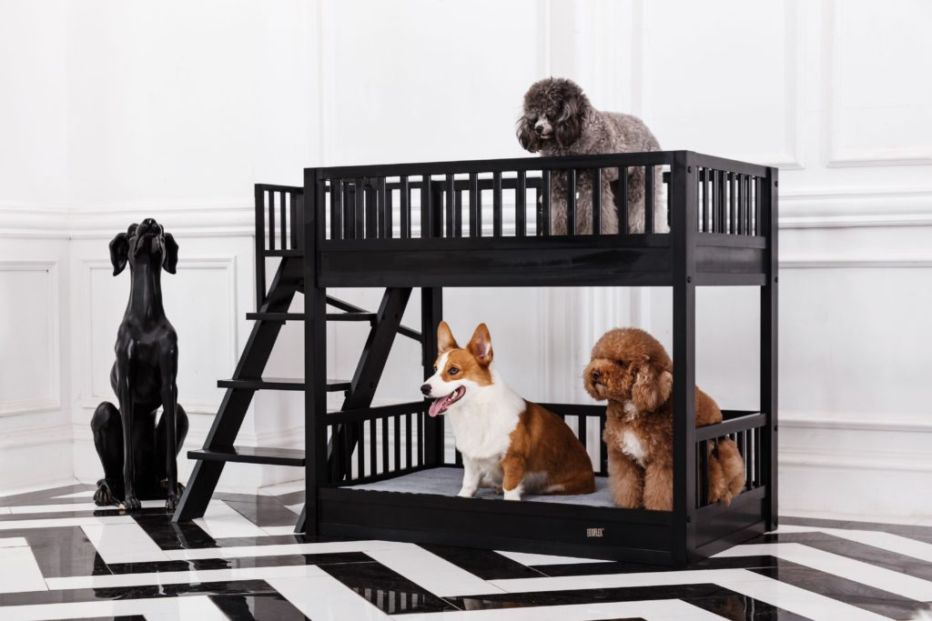 Ladder-bed-1024x683 +80 Adorable Dog Bed Designs That Will Surprise You