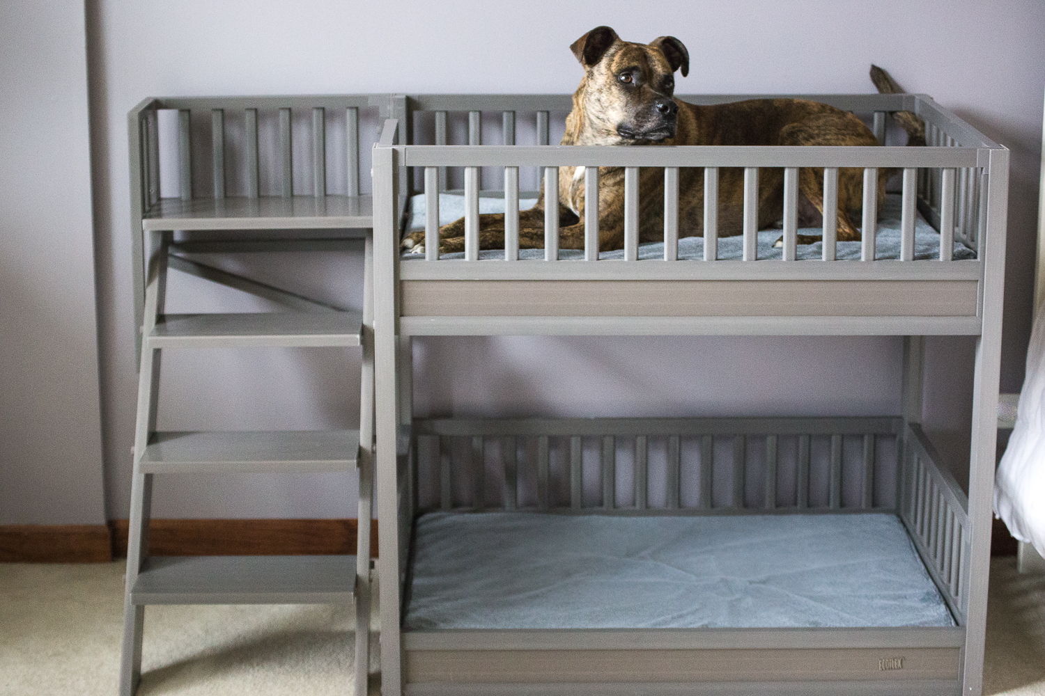 Ladder-bed. +80 Adorable Dog Bed Designs That Will Surprise You