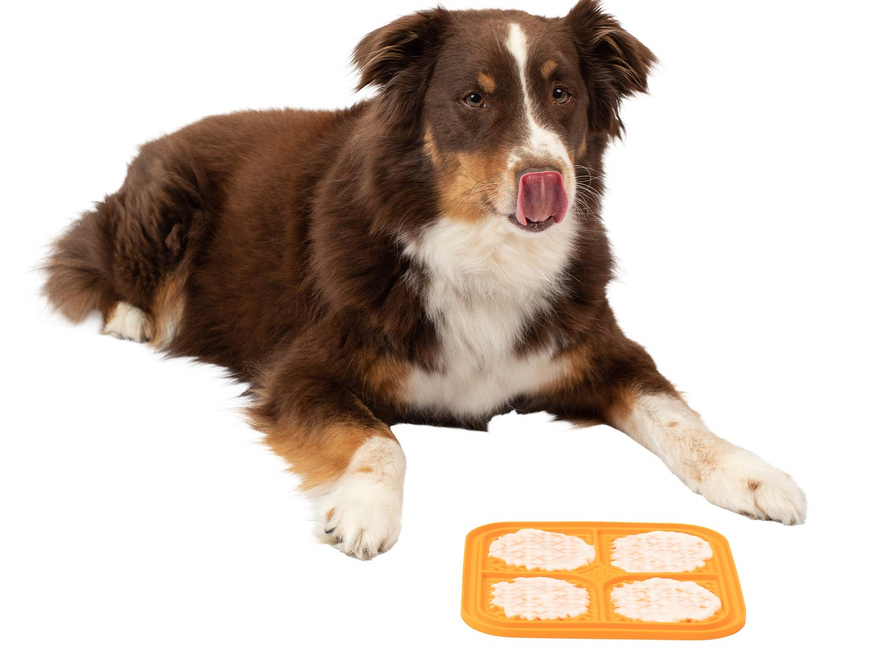 Lickable-mat. 10 Unique Luxury Gifts for Dogs That Amaze Everyone