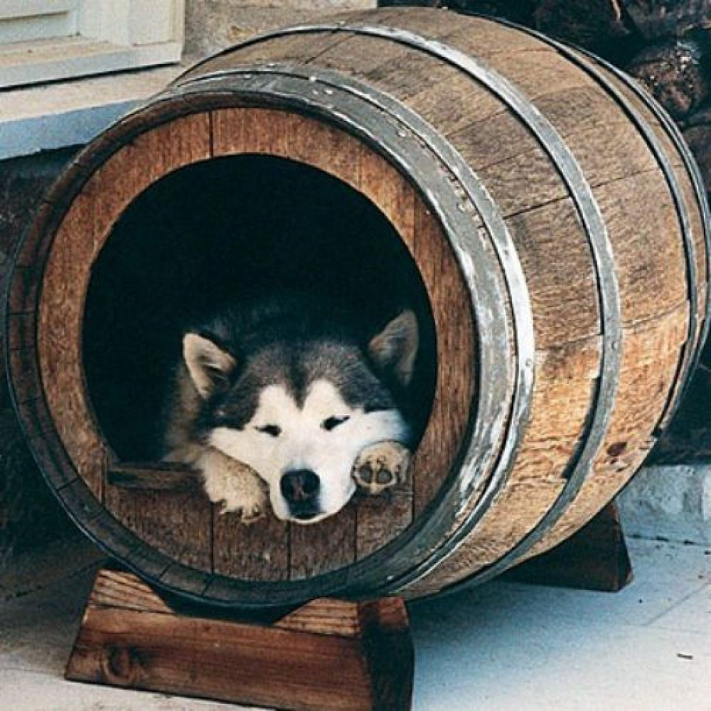 Wine-barrel-bed.-2-1024x1024 +80 Adorable Dog Bed Designs That Will Surprise You