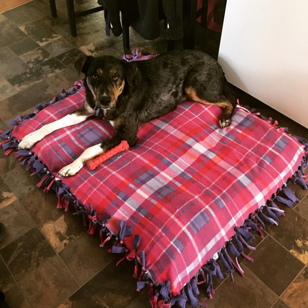 dog-beds-from-used-clothes..-1024x1024 +80 Adorable Dog Bed Designs That Will Surprise You