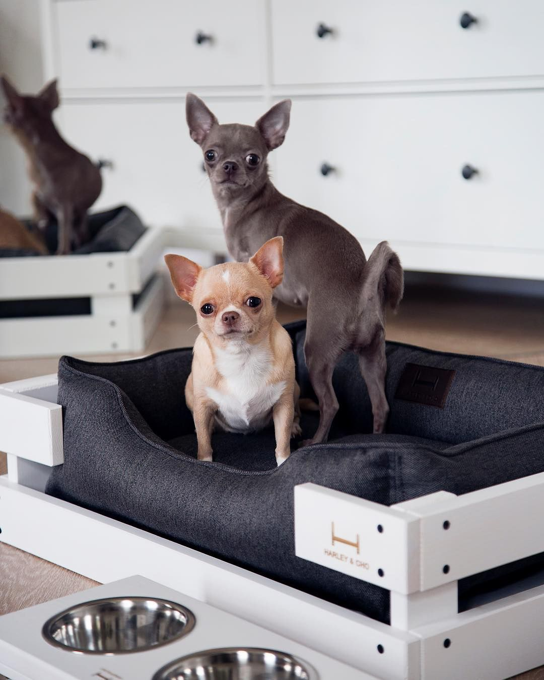 mini-pallet-bed-1 +80 Adorable Dog Bed Designs That Will Surprise You
