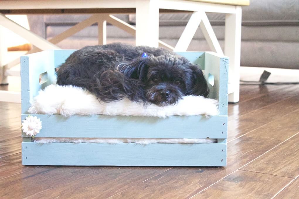wooden-pallet-1 +80 Adorable Dog Bed Designs That Will Surprise You
