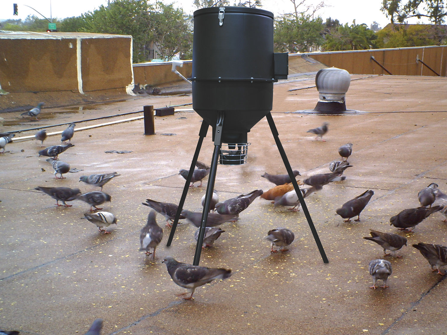 Birth-Control-Program-in-Pigeons Pigeon Population Control: Explore the Most Effective Methods