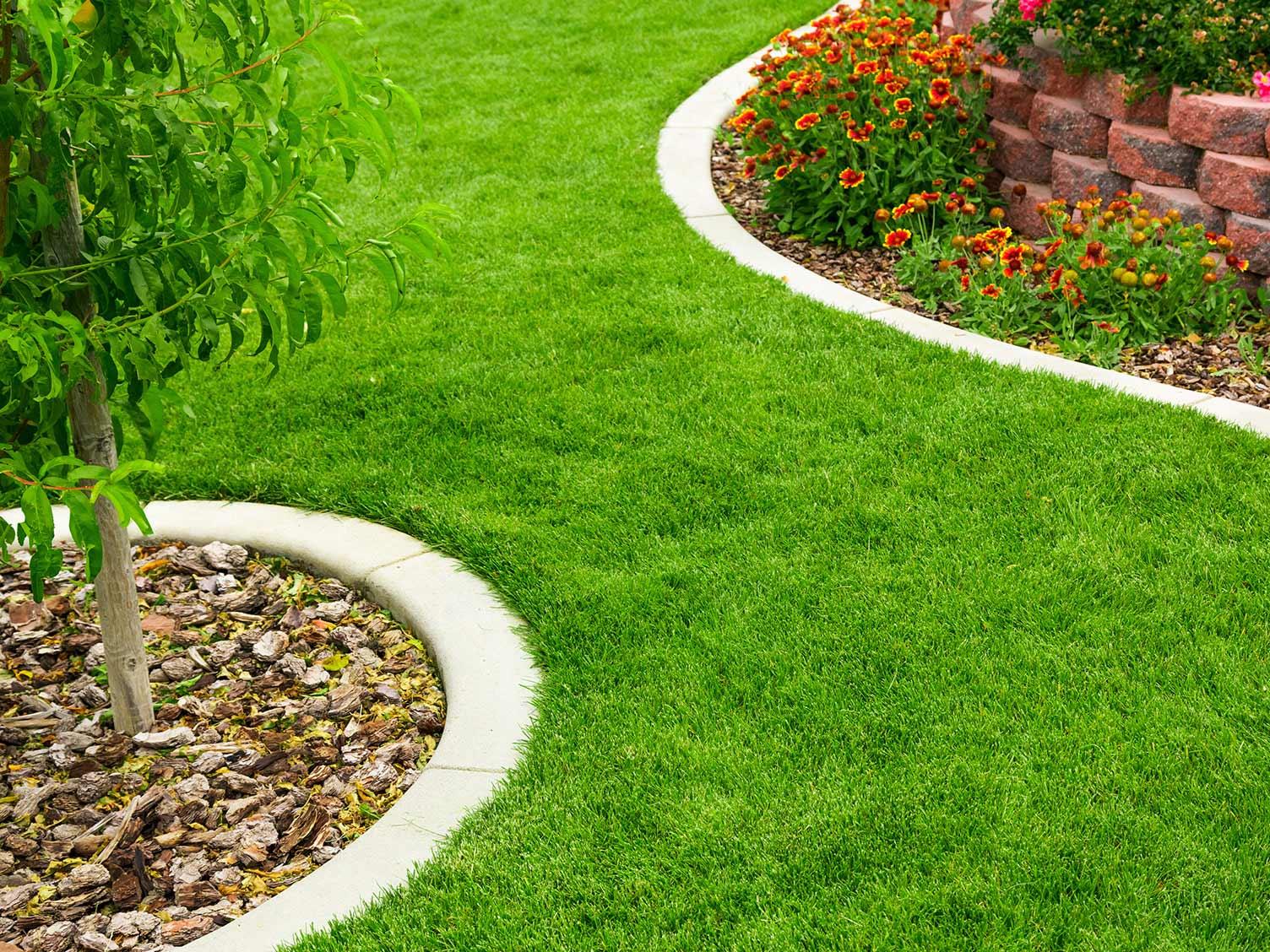 the-garden-Borders 5 Easy Tips to Renew Your Garden